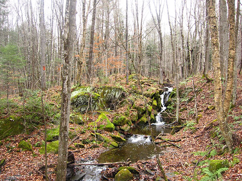 small Stream within forest.JPG