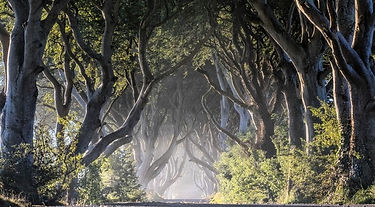 Dark Hedges, King's Road, Northern Ireland | 3 Day Private GOT Tour
