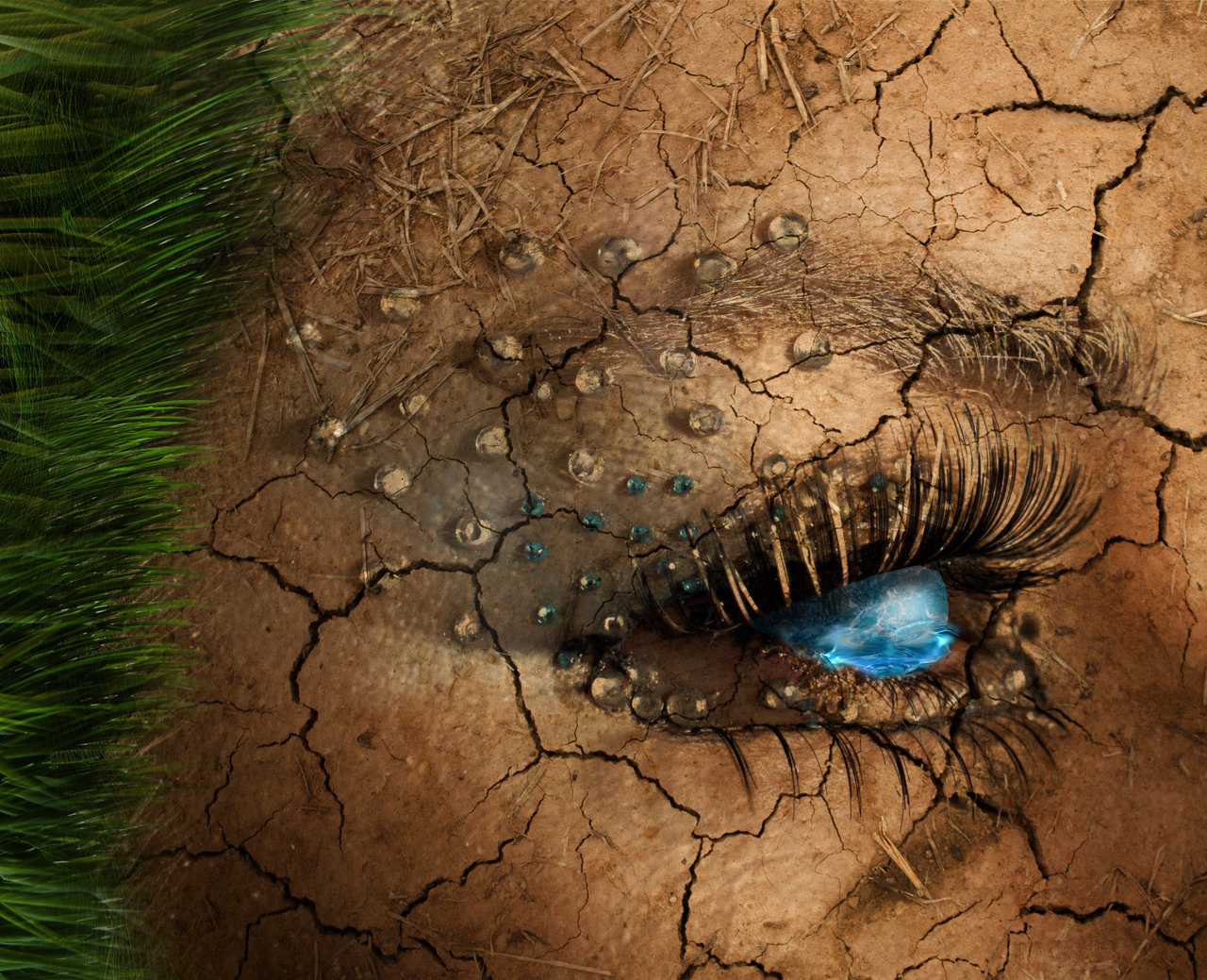 Nature's Eyes