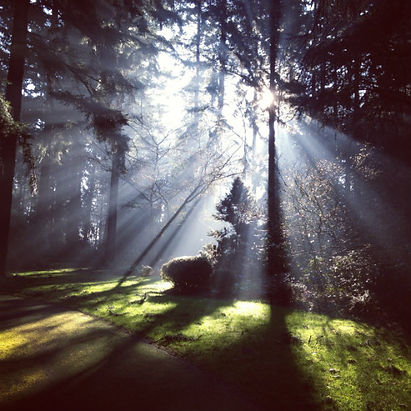 White light through trees sacred forest