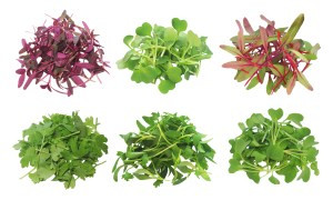 Benefit of Microgreens in Your Diet