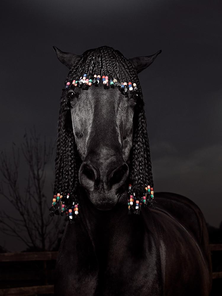 Видео, темная лошадка прикольные картинки