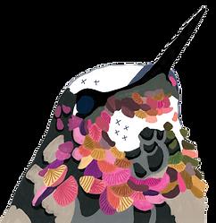 illustration-colibri-dessin-oiseau.png