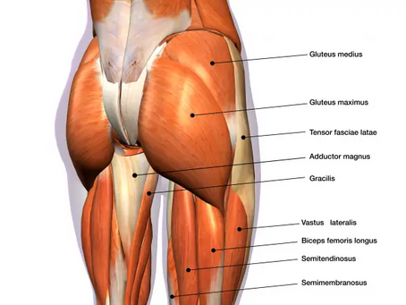 """Over Activation of Gluteals aka """"Butt Gripping"""""""