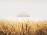 Harvest_PC.jpg