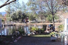 Pond View 2.JPG