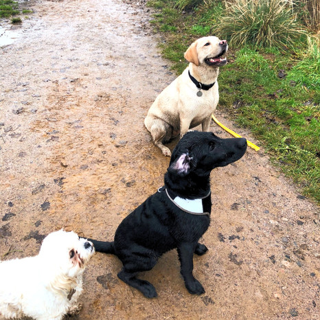 Pasty, Alfie and Molly