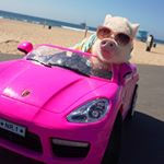 hamlet_the_piggy.jpg