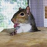 one_armed_squirrel.jpg