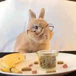 bunny.nyc.jpg