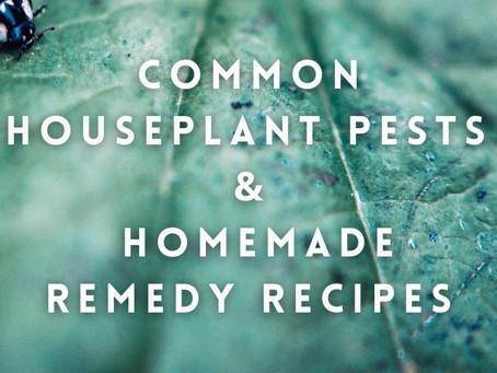 Common Houseplant Pests & Homemade Remedy Recipes