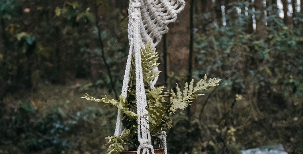 Yarn Palm 'Violet Flow' Plant Hanger