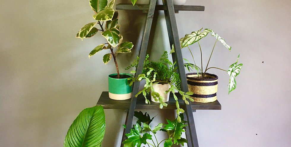Indoor Plant Shelfie - Storm Grey