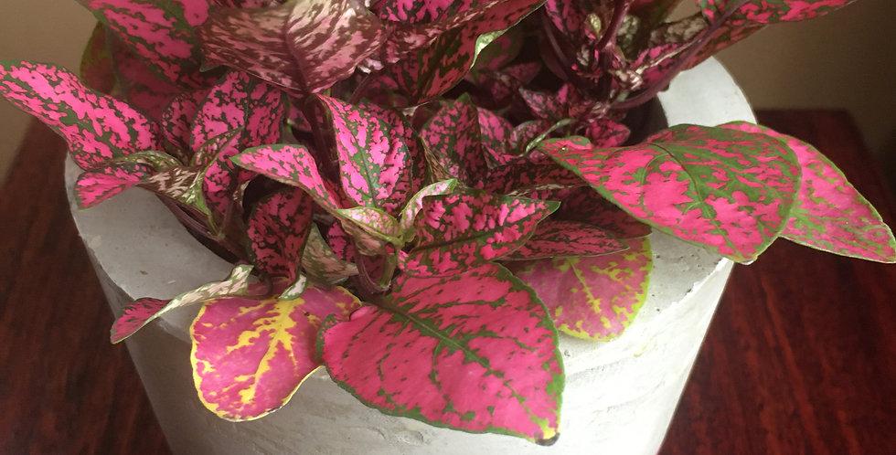 Pink Flash including plants - Set of 2