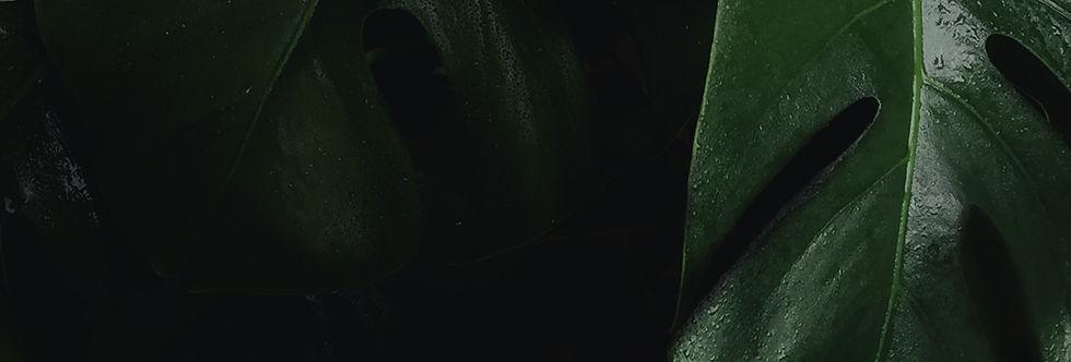 green-piece-aboutus-monstera-strip.jpg