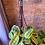 Thumbnail: Maranta Leuconeura / Prayer Plant