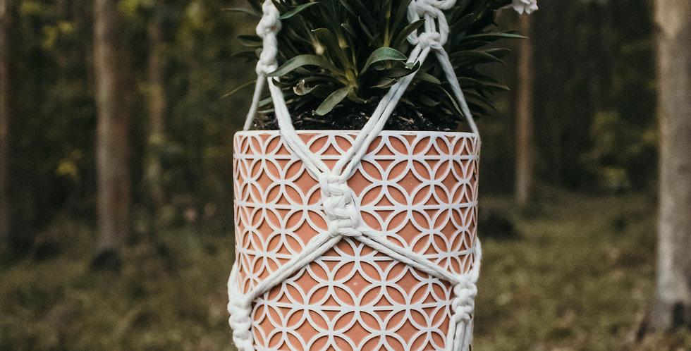 Yarn Palm 'Poppy' Plant Hanger