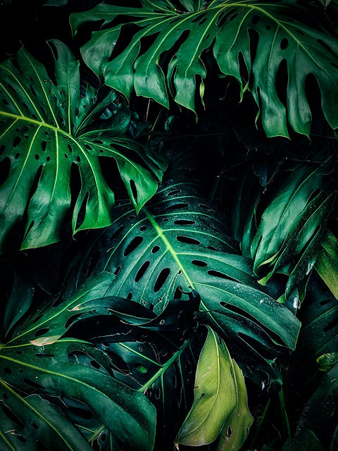close-up-photo-of-green-leafed-plant-140