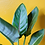 Thumbnail: Strelitzia Reginea