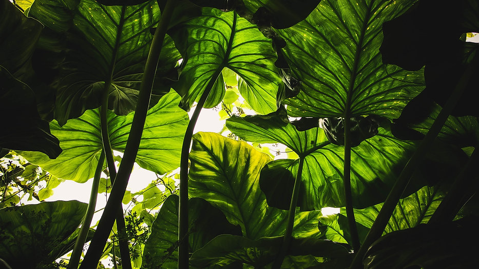 close-up-colors-ecology-environment-6319