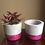Thumbnail: Pink Flash including plants - Set of 2
