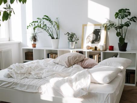 The Beginners Guide To Indoor Houseplants...