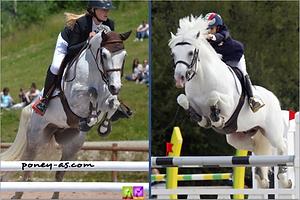 Reve du Haut Pont x Dexter Leam Pondi, elevage poneys de sport, Haras du Phoenix, Pfs