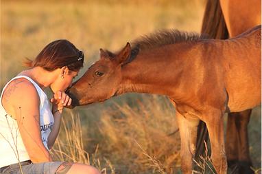 Five Star Alias, fille d'Usandro Tilia Derlenn, poney de sport, Haras du Phoenix