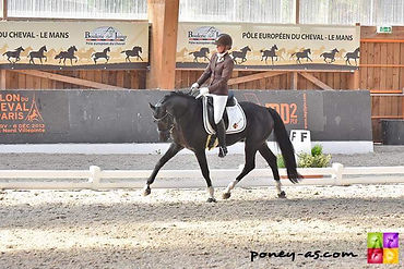 Orchard NL, poney de sport, dressage 4 ans
