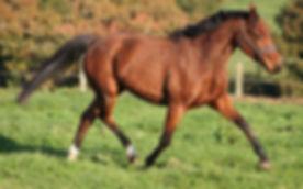 Demoiselle Der Lenn, valorisation poney, Haras du Phoenix