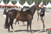 Queen Sympatico Tlia, valorisation poney de sport, M&A, Pfs, Haras du Phoenix