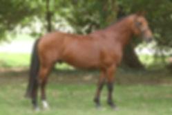 Best Of Tilia Derlenn, valorisation poneys 2016, Haras du Phoenix