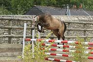 D'Angelo Der Lenn, valorisation poney 2015, fils d'Usandro Tilia Derlenn, Haras du Phoenix