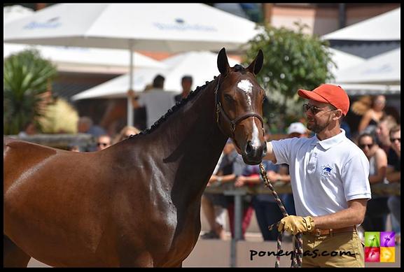 East River Alias, Championne de France Pfs 2016, Poney de sport, élevage poney