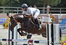 Salam du Roc, etalon Pfs, Haras du Phoenix, Elevage Alias, elevage poneys de sport