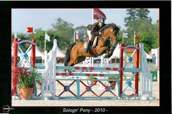 Qopper Der Lenn, Valorisation poney de sport, Haras du Phoenix
