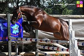 Calgary Der Lenn, étalon poney Pfs, Haras du Phoenix