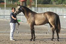 D'Angelo Der Lenn, poney de sport, M&A 2015, Haras du Phoenix