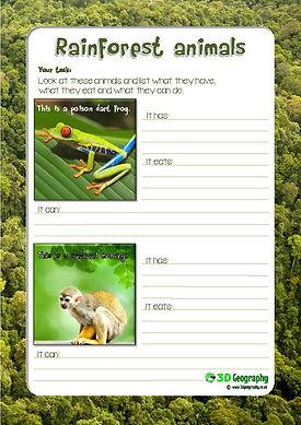 rainforest animals worksheet