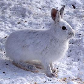 mountain fauna