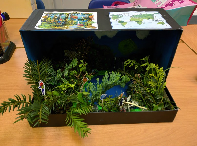 Rainforest Dioramas