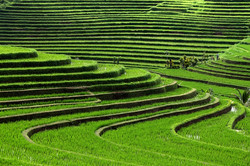 mountain farming - crops