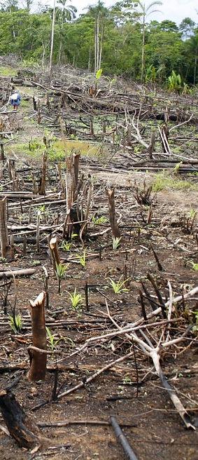 amazon rainforest mapping activity