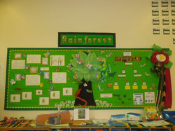 class displays rainforest 12