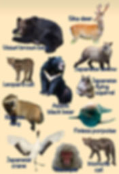 picture of japanese animals