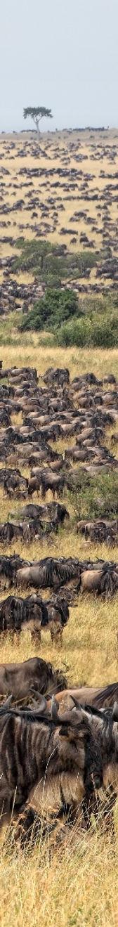 African animals | KS2 Geography | Geography of Kenya | animal pictures | safari animals | big five animals