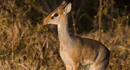 African animals | Geography of Kenya | animal pictures | safari animals