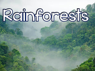 rainforest Geography | KS2 Geography | KS3 Geography | geography topics