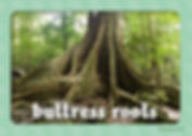 rainforest words for word wall (2018)_Page_02.jpg