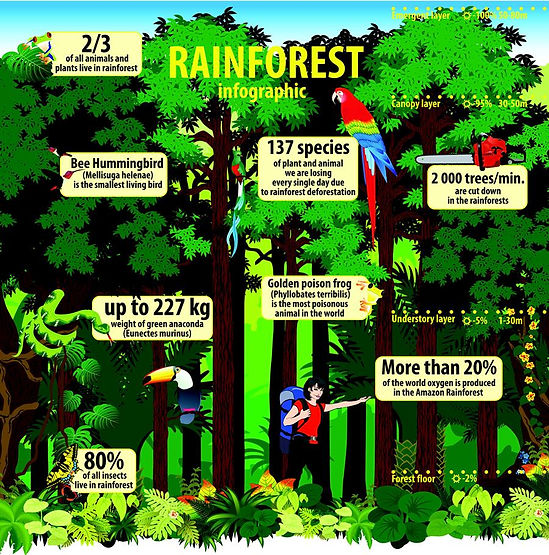 learning about the rainforest | rainforest diagram